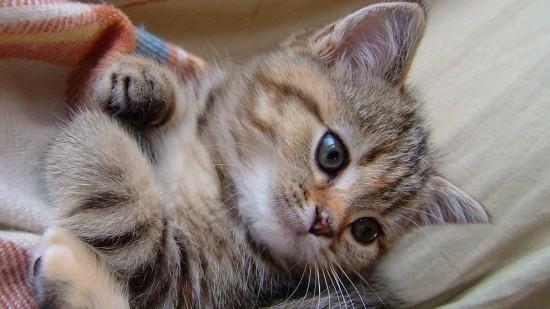 愛らしい,猫ちゃん,画像,まとめ008