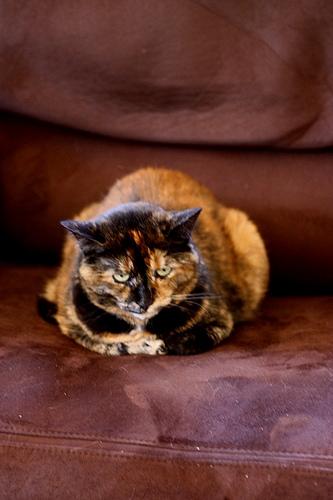 悪人顔,猫,画像,まとめ008