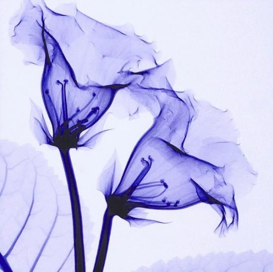花,レントゲンフォト,画像,美しすぎる,話題に009