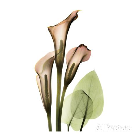 花,レントゲンフォト,画像,美しすぎる,話題に010