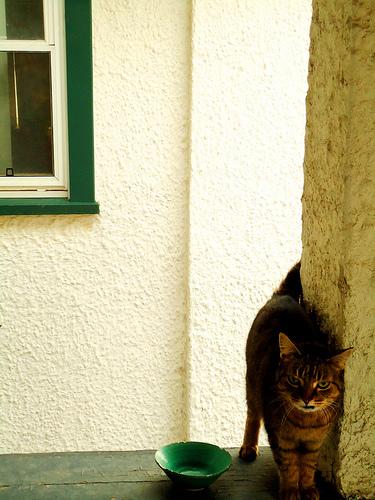 悪人顔,猫,画像,まとめ010