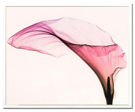 花,レントゲンフォト,画像,美しすぎる,話題に011