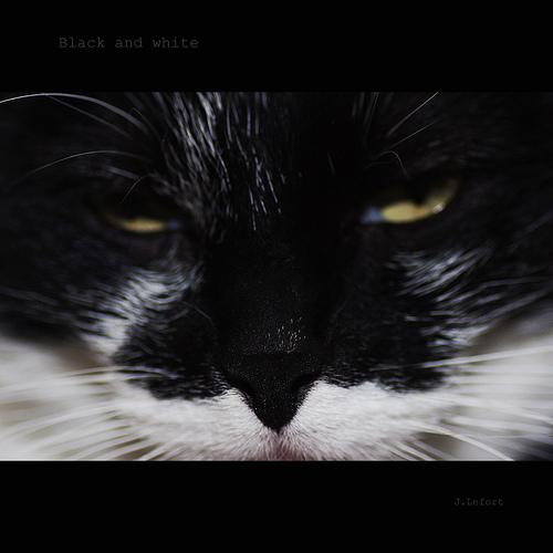 悪人顔,猫,画像,まとめ011