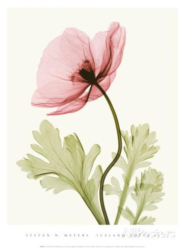 花,レントゲンフォト,画像,美しすぎる,話題に012
