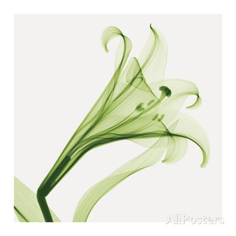 花,レントゲンフォト,画像,美しすぎる,話題に013