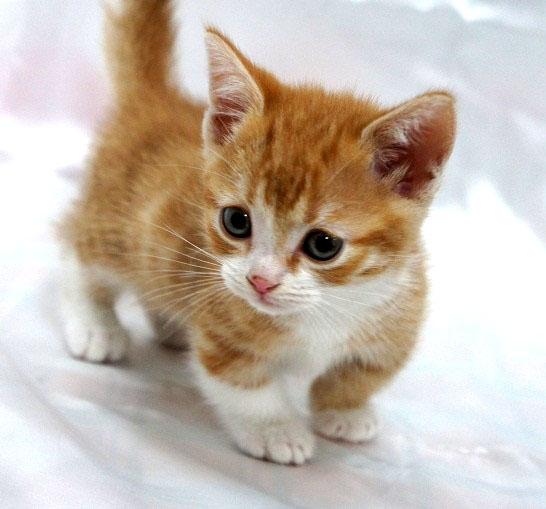 愛らしい,猫ちゃん,画像,まとめ013