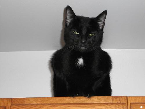 悪人顔,猫,画像,まとめ014