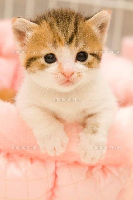 愛らしい,猫ちゃん,画像,まとめ015