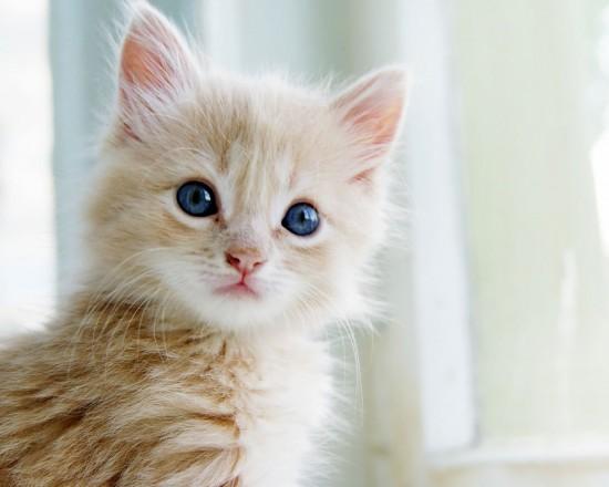 愛らしい,猫ちゃん,画像,まとめ017