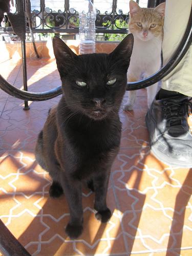 悪人顔,猫,画像,まとめ017