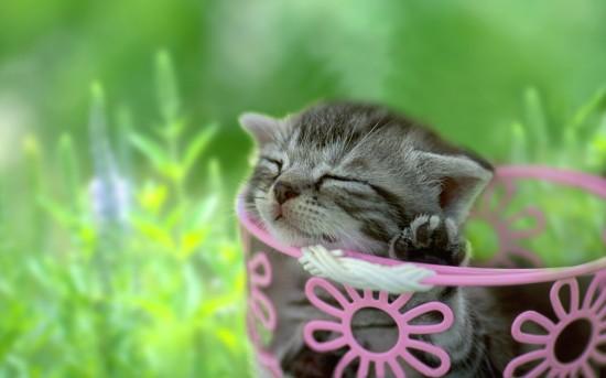 愛らしい,猫ちゃん,画像,まとめ033