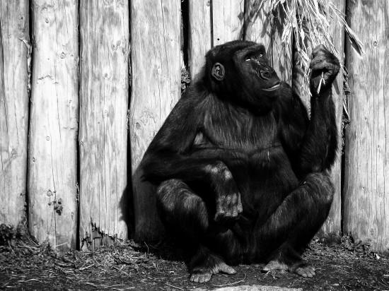 動物,美しい,モノクロ写真,まとめ040