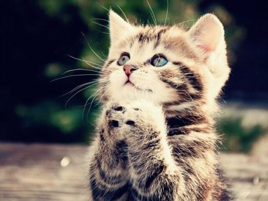 愛らしい,猫ちゃん,画像,まとめ041