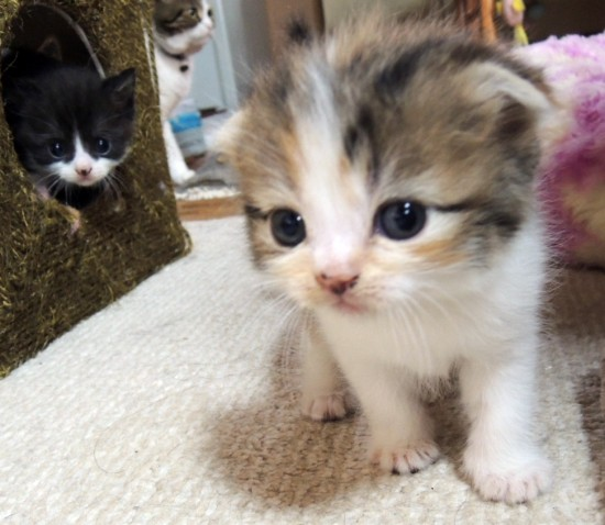 愛らしい,猫ちゃん,画像,まとめ043