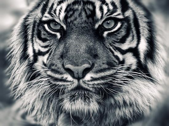 動物,美しい,モノクロ写真,まとめ044