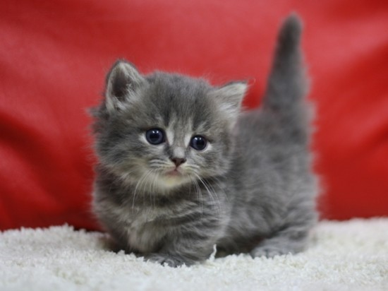 愛らしい,猫ちゃん,画像,まとめ046
