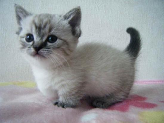 愛らしい,猫ちゃん,画像,まとめ048