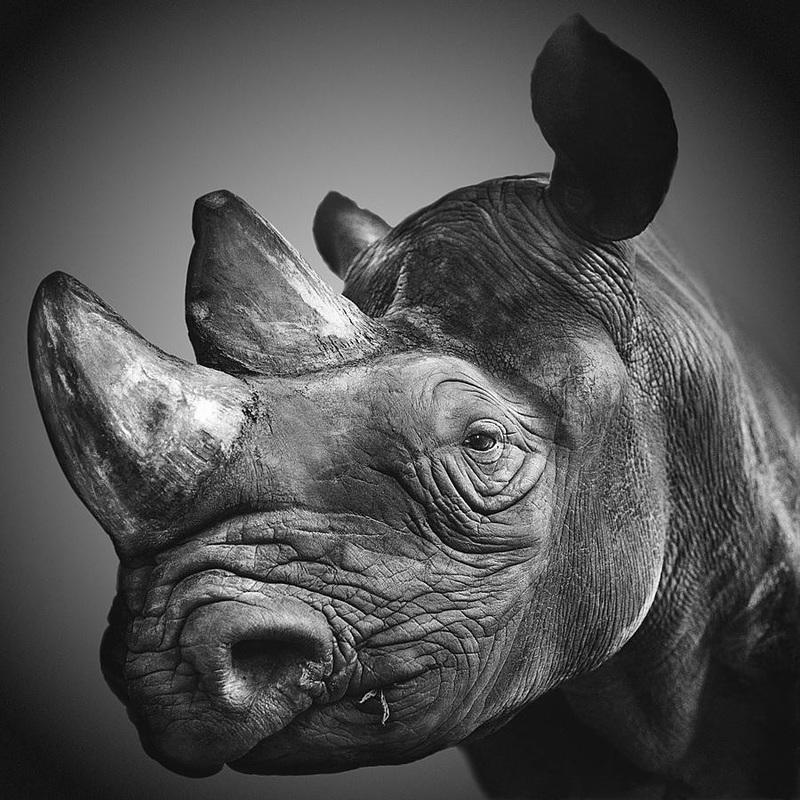 動物,美しい,モノクロ写真,まとめ056