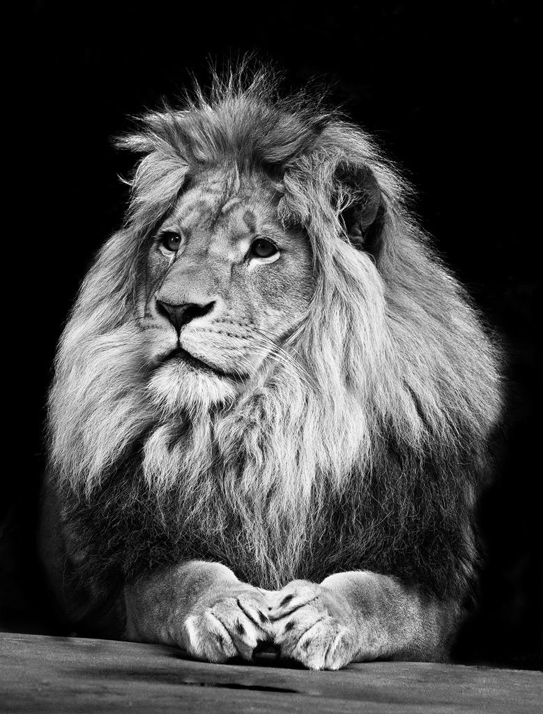 動物,美しい,モノクロ写真,まとめ063