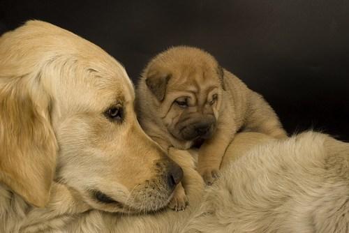 カワユス,動物,赤ちゃん,画像,まとめ002