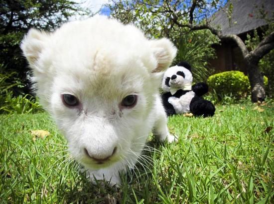 カワユス,動物,赤ちゃん,画像,まとめ042