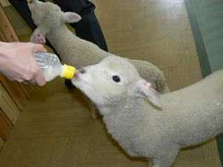 カワユス,動物,赤ちゃん,画像,まとめ055