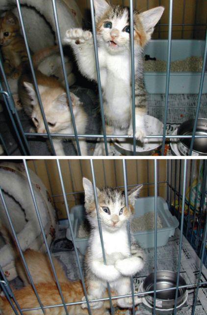 可愛い,動物,animal,癒し,画像,まとめ013