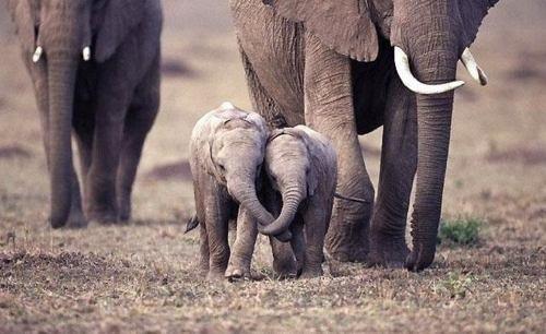 可愛い,動物,animal,癒し,画像,まとめ253