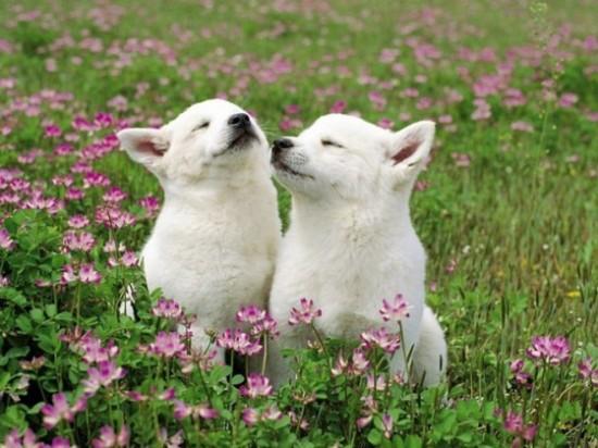 可愛い,動物,animal,癒し,画像,まとめ261