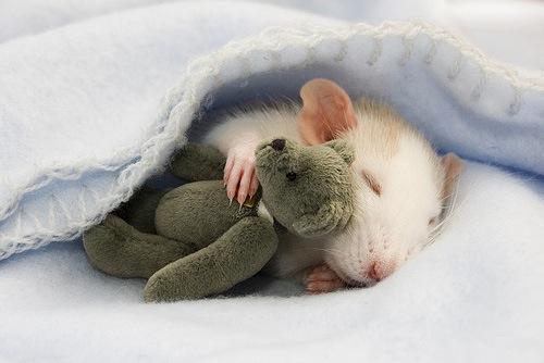 可愛い,動物,animal,癒し,画像,まとめ291