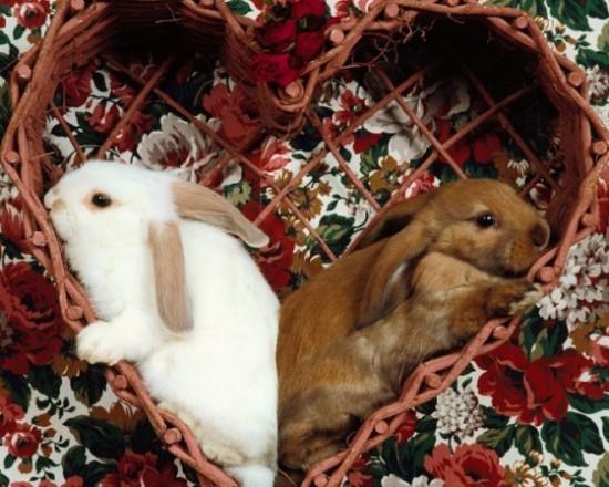 可愛い,動物,animal,癒し,画像,まとめ294
