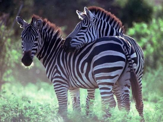 可愛い,動物,animal,癒し,画像,まとめ297