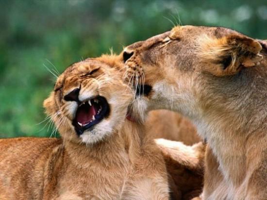 可愛い,動物,animal,癒し,画像,まとめ299