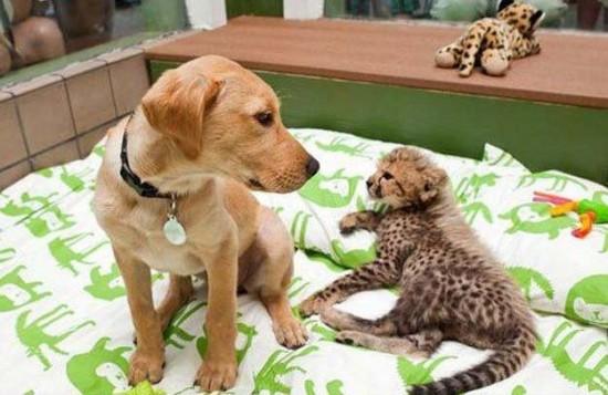 可愛い,動物,animal,癒し,画像,まとめ317