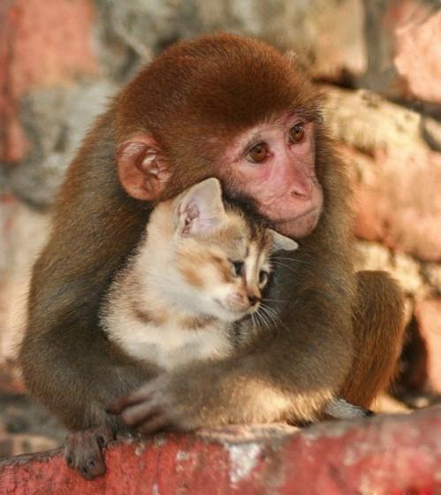 可愛い,動物,animal,癒し,画像,まとめ323