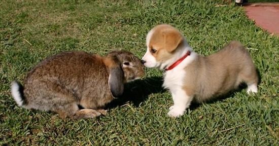 可愛い,動物,animal,癒し,画像,まとめ328