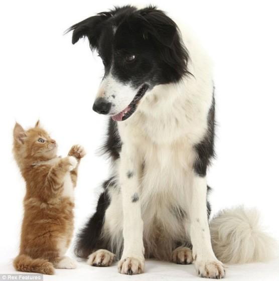 可愛い,動物,animal,癒し,画像,まとめ342