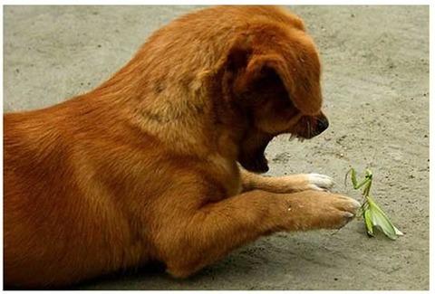 可愛い,動物,animal,癒し,画像,まとめ365
