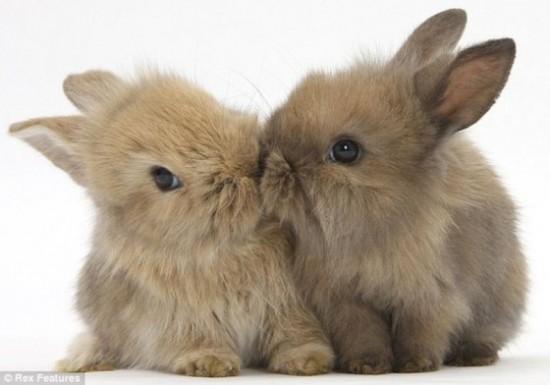 可愛い,動物,animal,癒し,画像,まとめ374