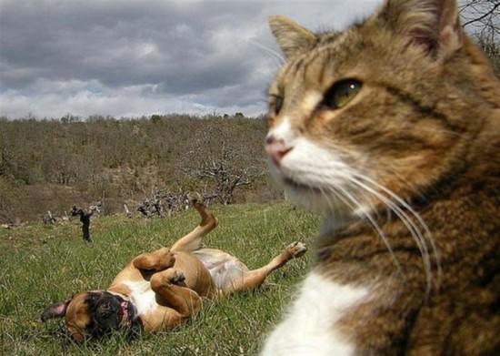 可愛い,動物,animal,癒し,画像,まとめ382