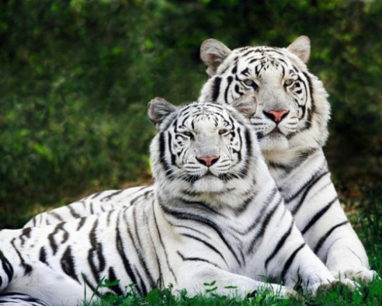 可愛い,動物,animal,癒し,画像,まとめ391