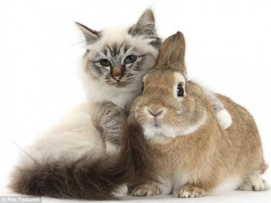 可愛い,動物,animal,癒し,画像,まとめ399