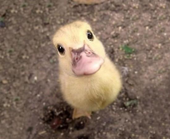 可愛い,動物,animal,癒し,画像,まとめ416