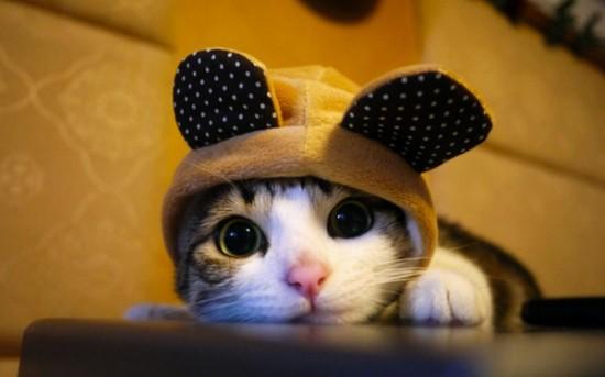 可愛い,動物,animal,癒し,画像,まとめ439