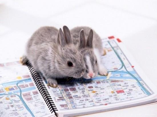 可愛い,動物,animal,癒し,画像,まとめ451