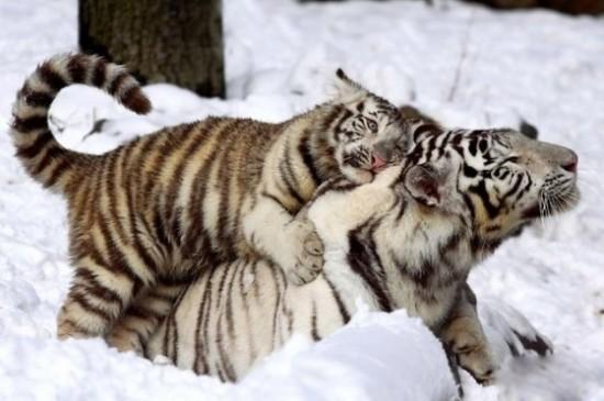 可愛い,動物,animal,癒し,画像,まとめ632