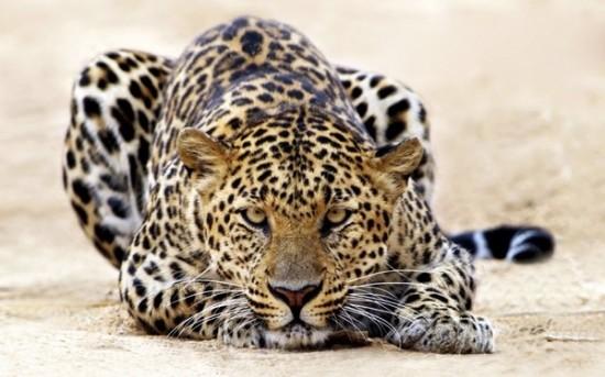 可愛い,動物,animal,癒し,画像,まとめ640