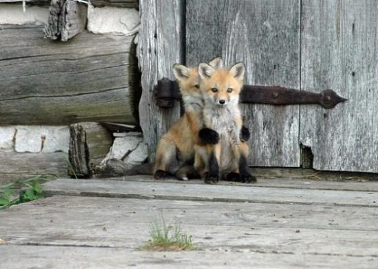 可愛い,動物,animal,癒し,画像,まとめ690