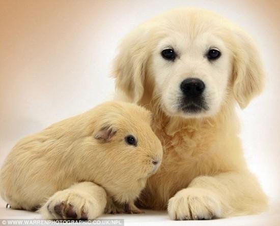 可愛い,動物,animal,癒し,画像,まとめ691