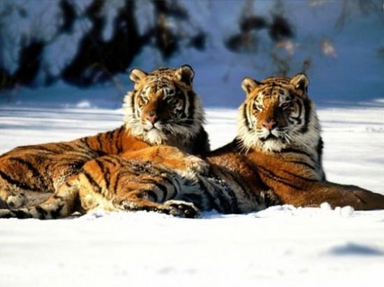 可愛い,動物,animal,癒し,画像,まとめ700